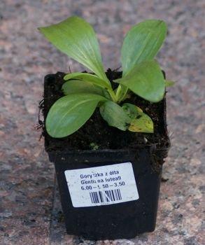 Szkółka roślin sklep internetowy